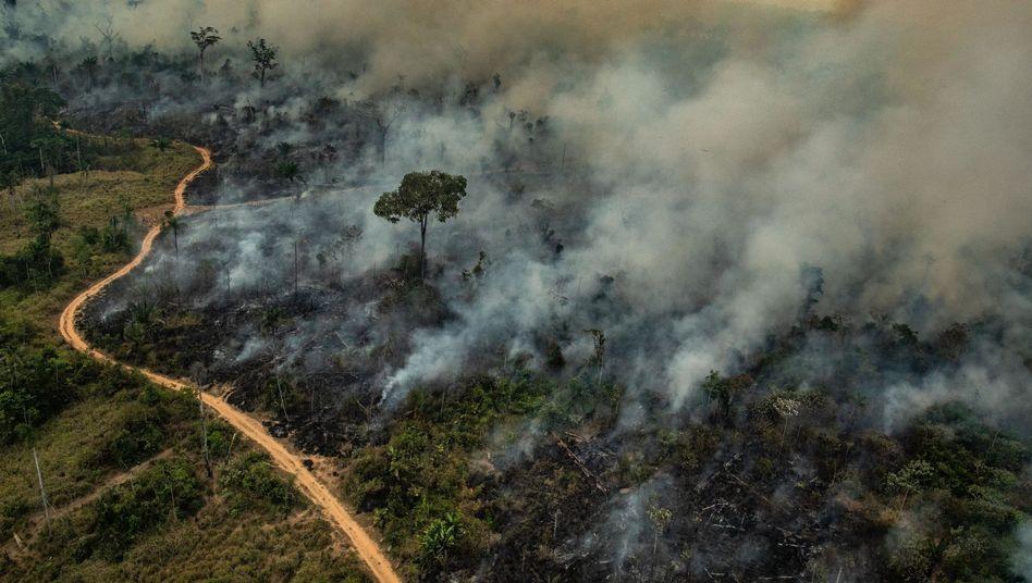 Rauch steigt in Brasilien auf - die Feuer haben sich in den vergangenen Tagen ausgebreitet