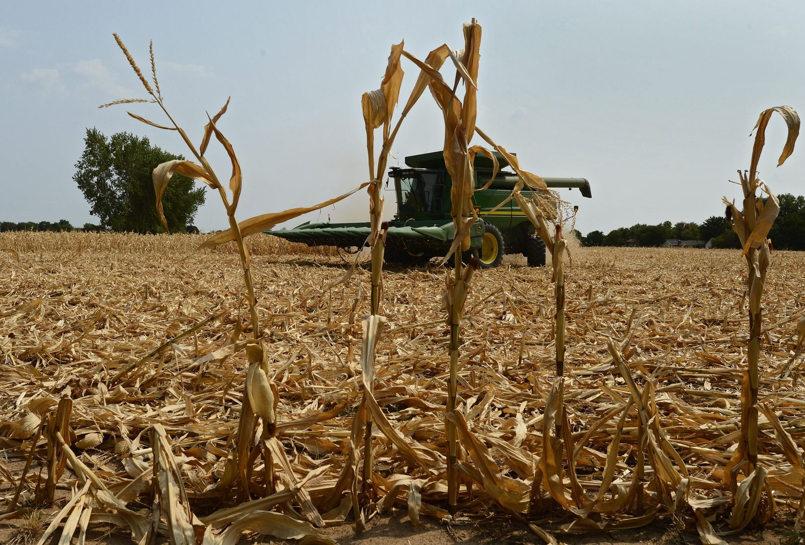 Severe drought across most of the mid-west is affecting crops and
