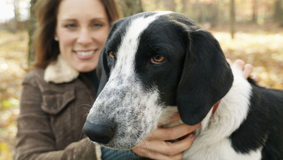 Weiß genau, wie Frauchen drauf ist: Hunde können den emotionalen Gehalt eines Lauts erfassen