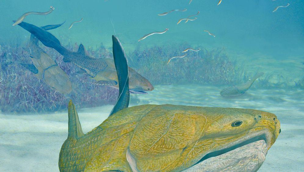 Panzerfische mit Biss: Die Entwicklung des modernen Kauapparates
