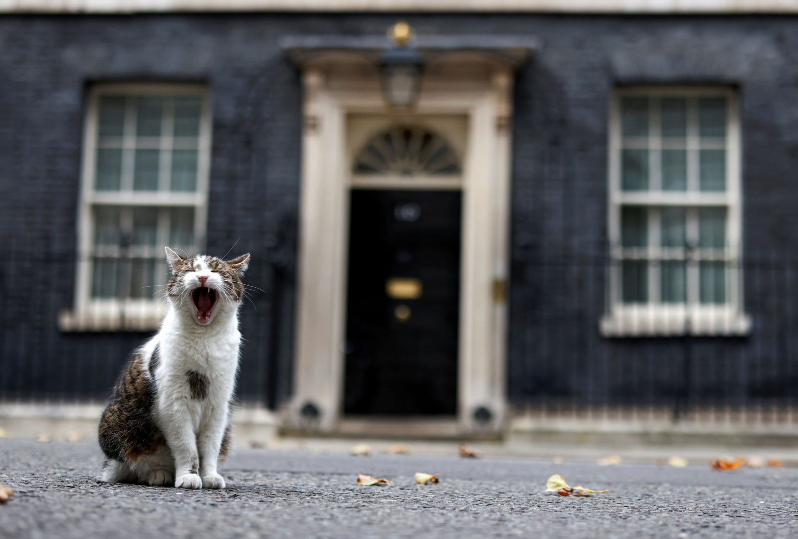Larry the cat yawns outside Downing Street in London