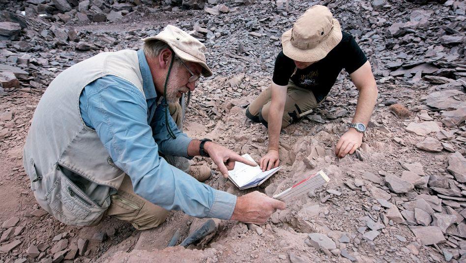 Paläontologen bei Ausgrabungen in Thüringen