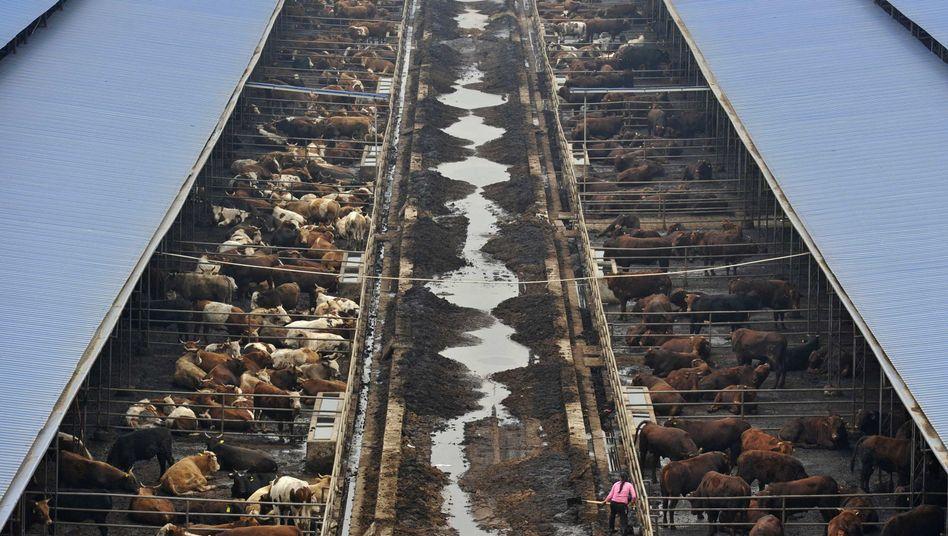 Farm in China (Archivbild): Soja kommt künftig auch aus Argentinien