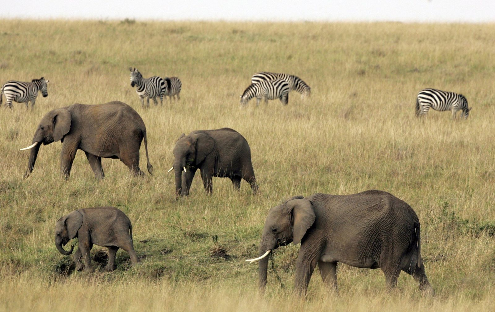 Elefanten / Kenia