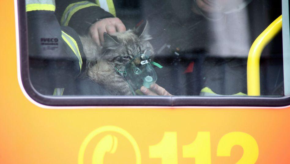 Mit einer Sauerstoffmaske beatmen Feuerwehrmänner eine gerettete Katze