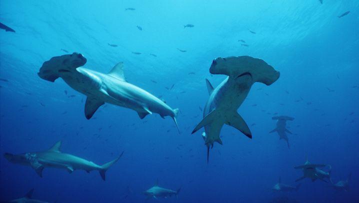 WWF-Bilanz 2013: Gewinner und Verlierer des Tierreichs