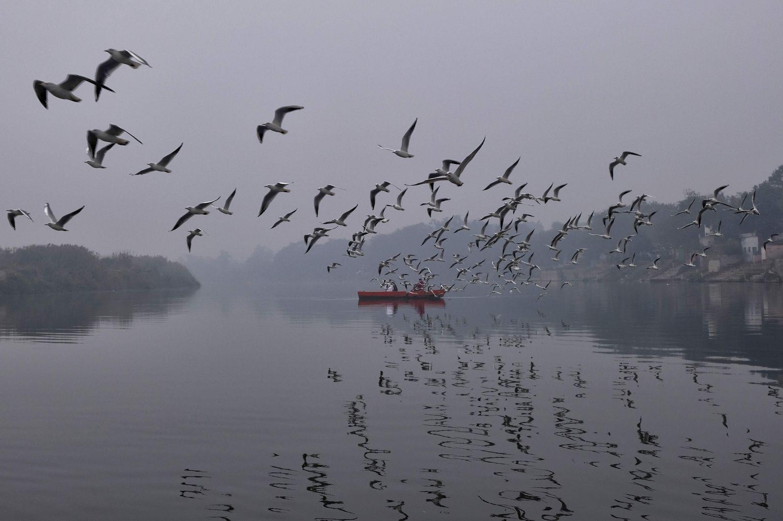 TOPSHOT-INDIA-ENVIRONMENT-POLLUTION-BIRDS