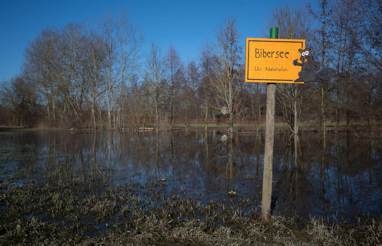 Biber stauen Bach zu kleinem See auf