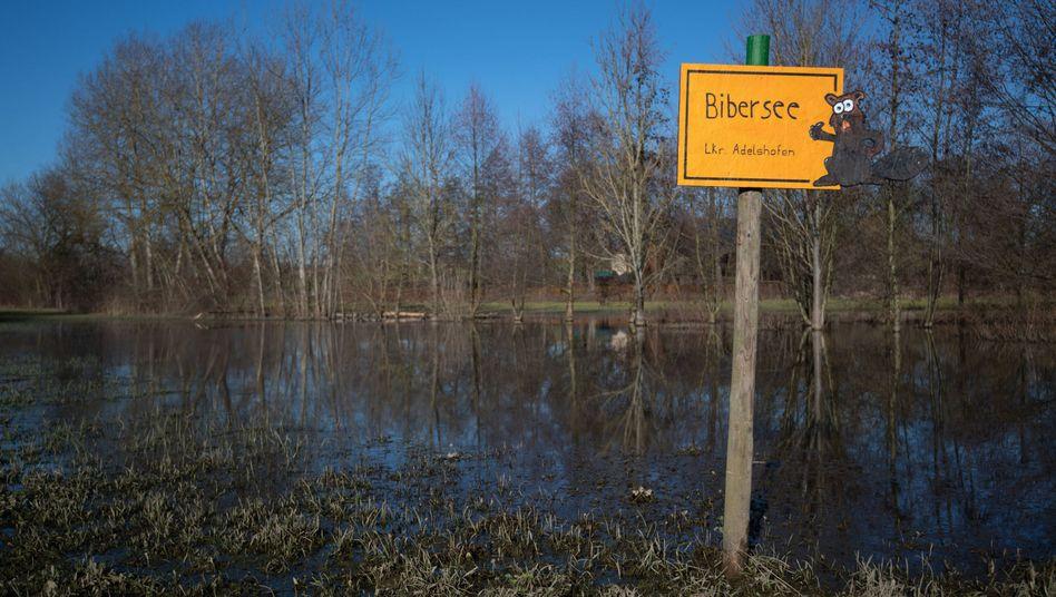 """Ein handgemachtes gelbes Ortsschild verweist auf den """"Bibersee"""" in der Nähe des Eppinger Ortsteils Adelshofen"""