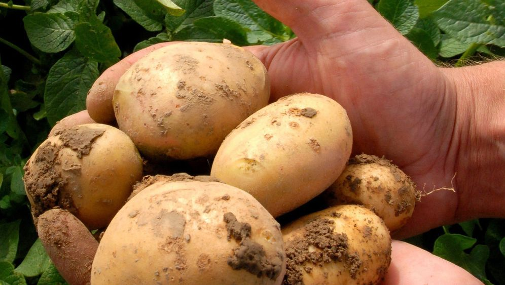 Illegales Spiel: Jugendliche schießen mit Kartoffelkanone