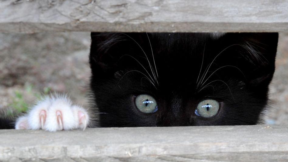 Wachsame Katze
