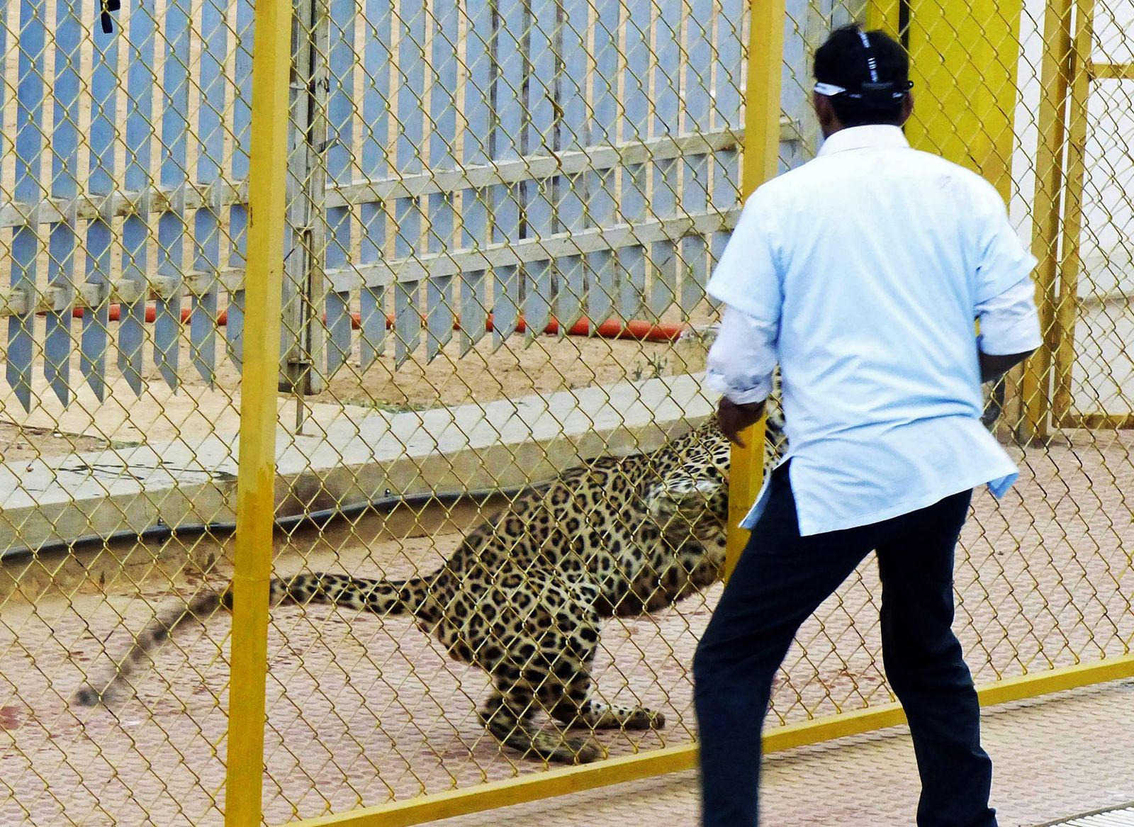 Indien / Schule / Leopard