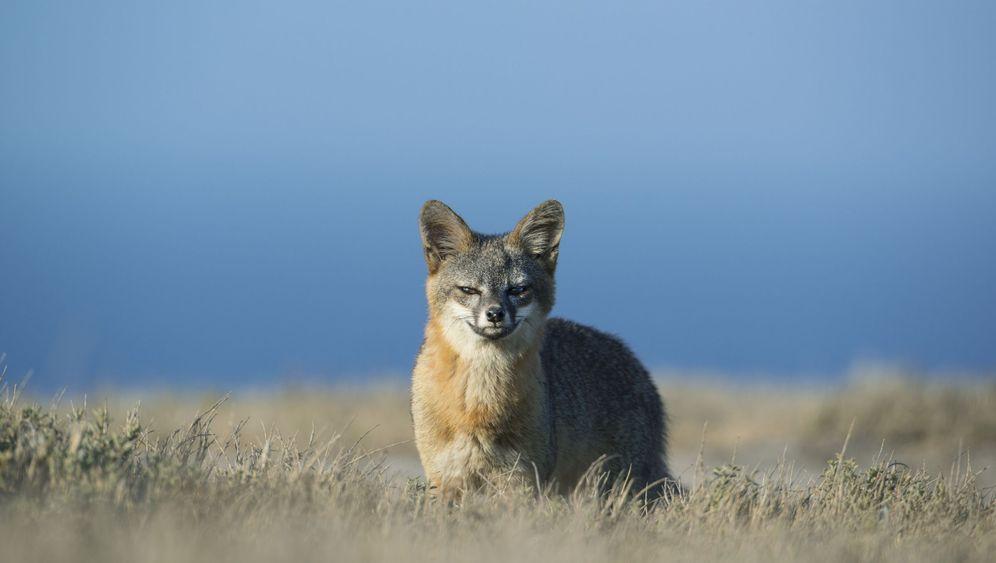 Rote Liste: Vom Aussterben bedrohte Arten
