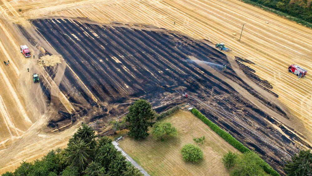 Trockenheit in Deutschland: Verbrannte Felder, zerstörte Wälder