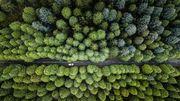 Die grüne Pausetaste