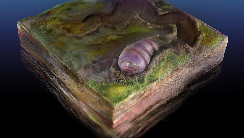 Künstlerische Darstellung von Ikaria wariootia: 555 Millionen Jahre alter Wurm