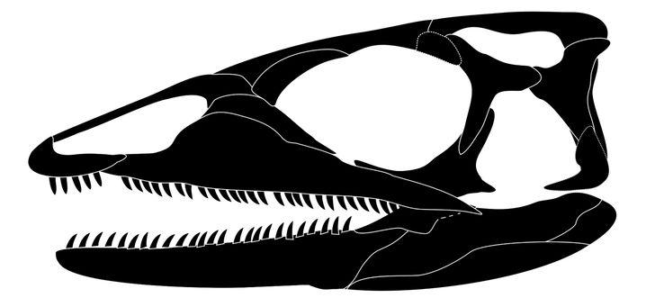Schädelrekonstruktion: Der Zwergsaurier ist einer der ältesten Vertreter der Schuppenechsen