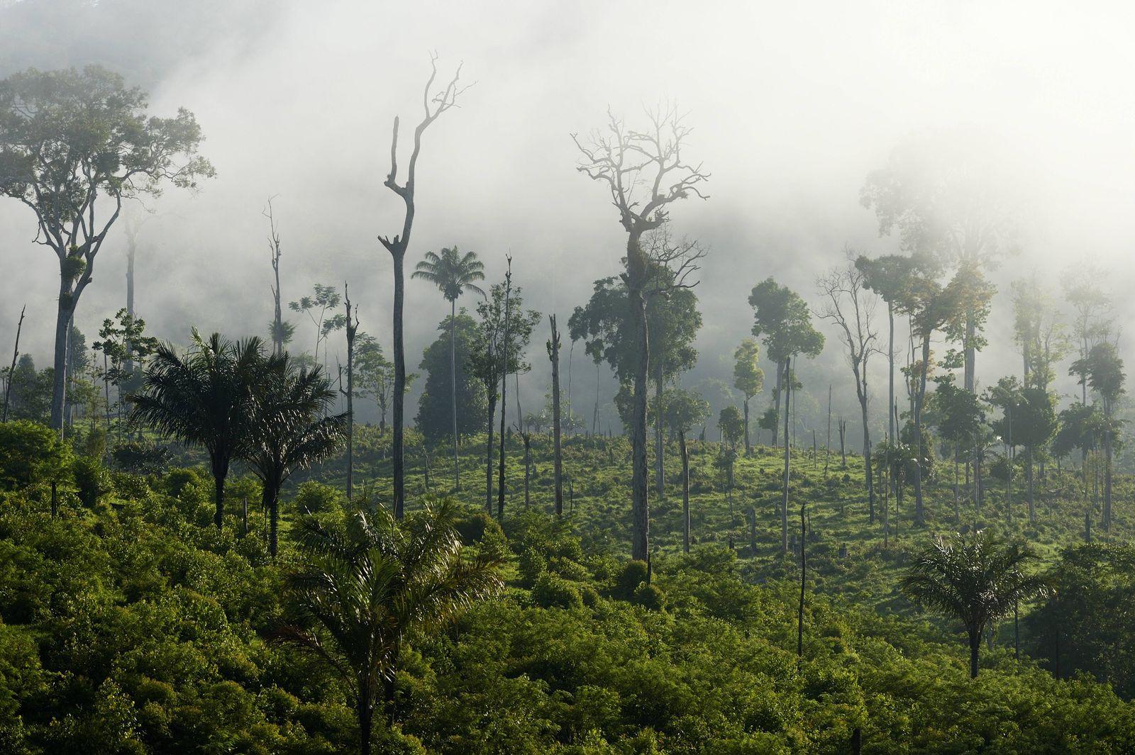 EINMALIGE VERWENDUNG Regenwald/ Amazonas/ Brandrodung