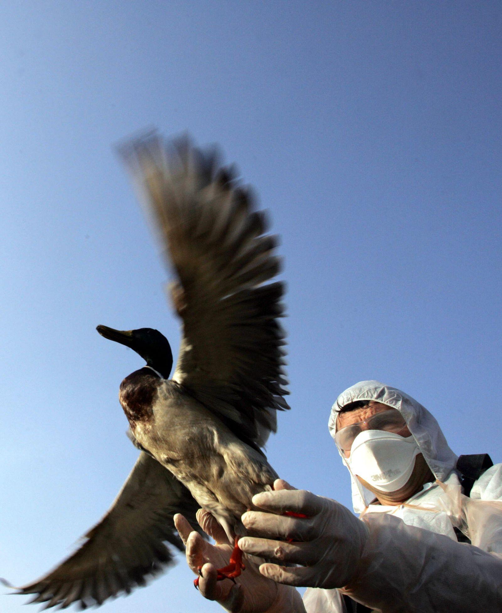 Vogelgrippe / Frankreich