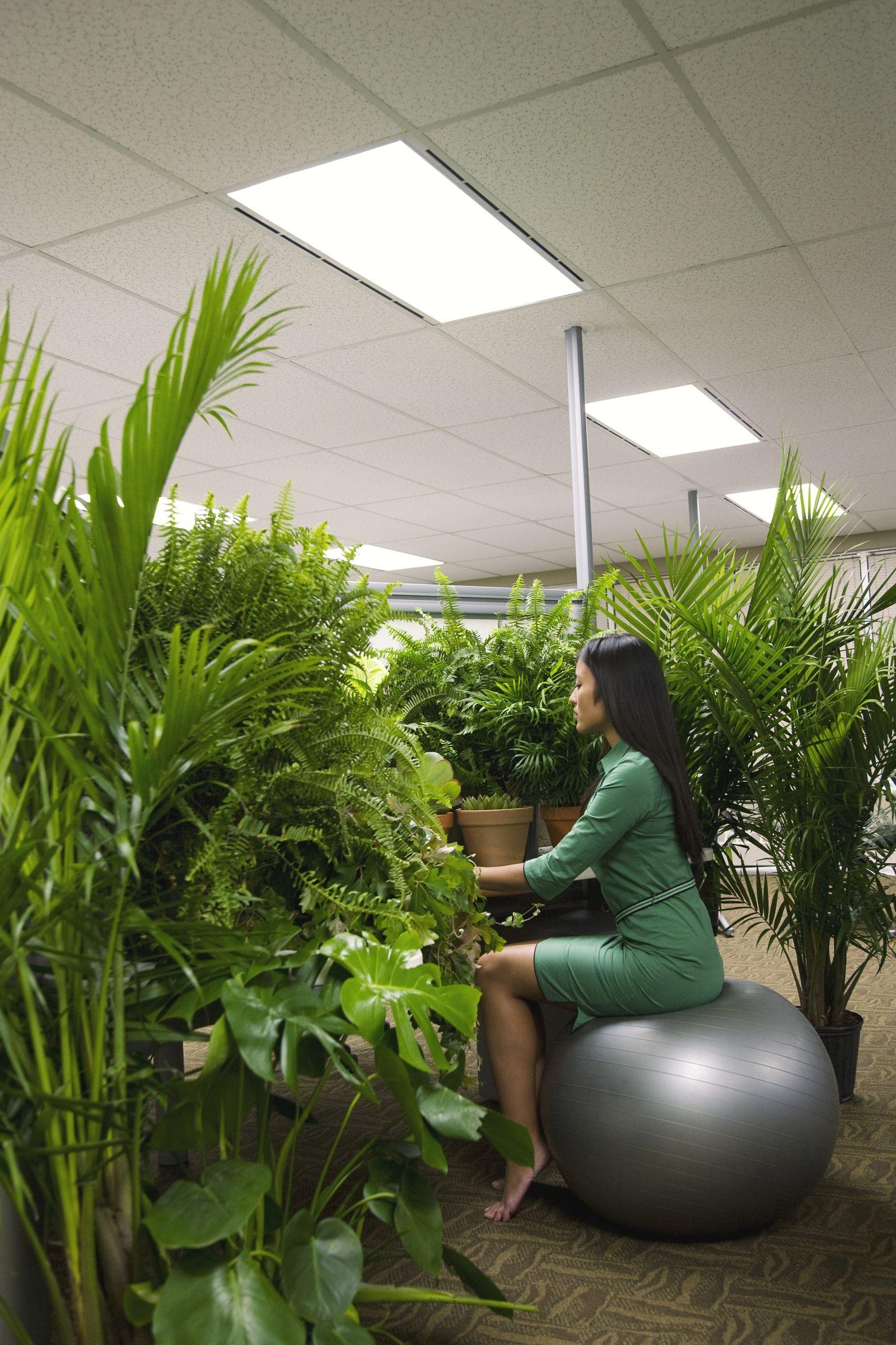 EINMALIGE VERWENDUNG Pflanzen Büro