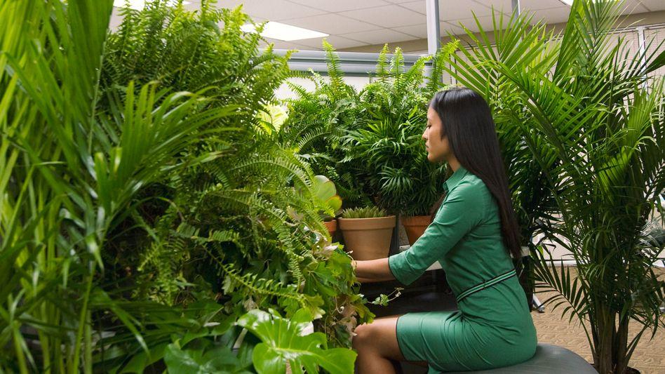 Dr. Livingstone, wie ich vermute: Mit Pflanzen wird das Büroleben angenehmer