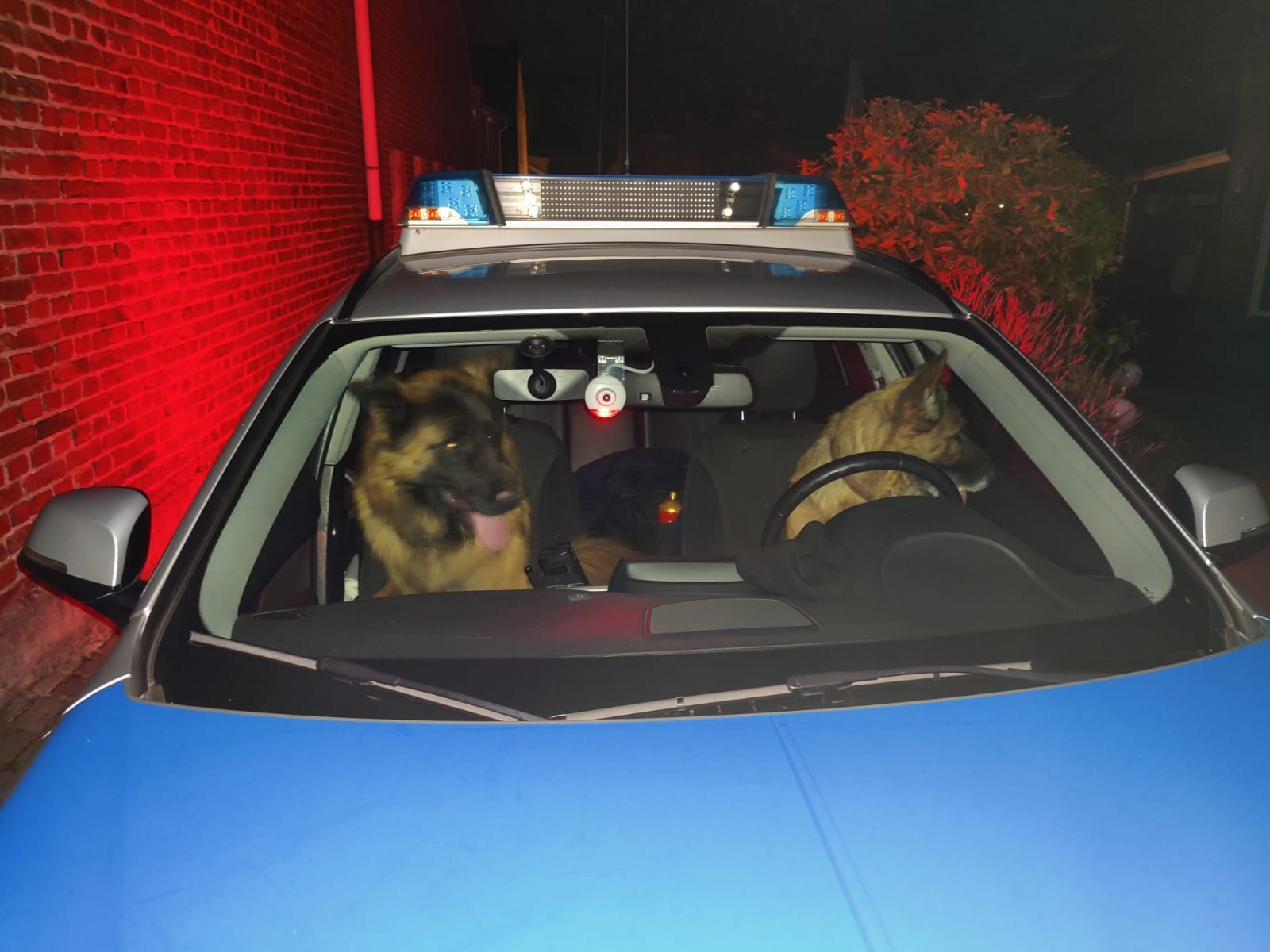 Hunde kapern Streifenwagen