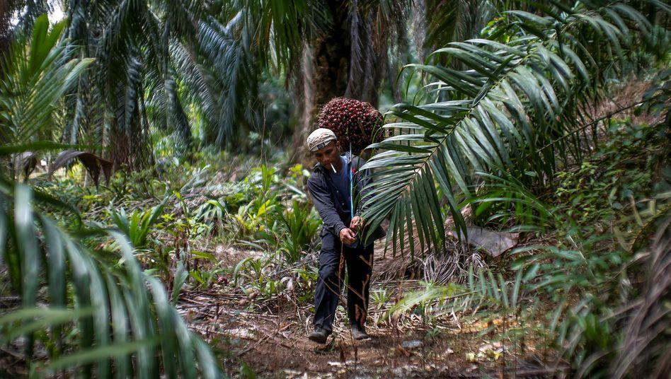 Ein Arbeiter in einer Palmölplantage nahe Kuala Lumpur: Die Arbeit auf den Plantagen gilt als hart, gefährlich und schmutzig