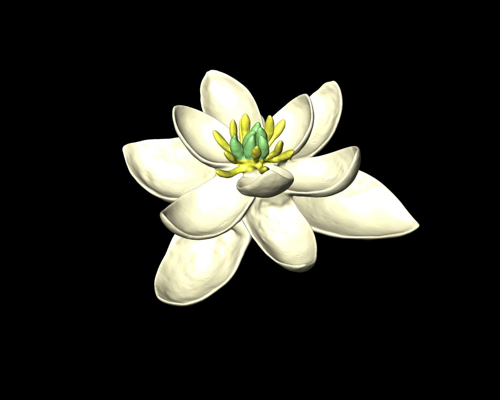 EINMALIGE VERWENDUNG Erste Blumen / Threes