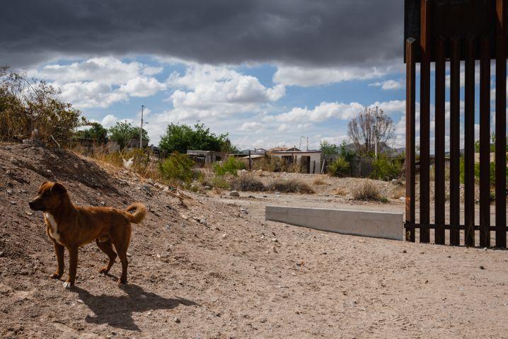 Hunde kennen keine Grenzen: Eine halbe Mauer trennt Mexiko von New Mexico