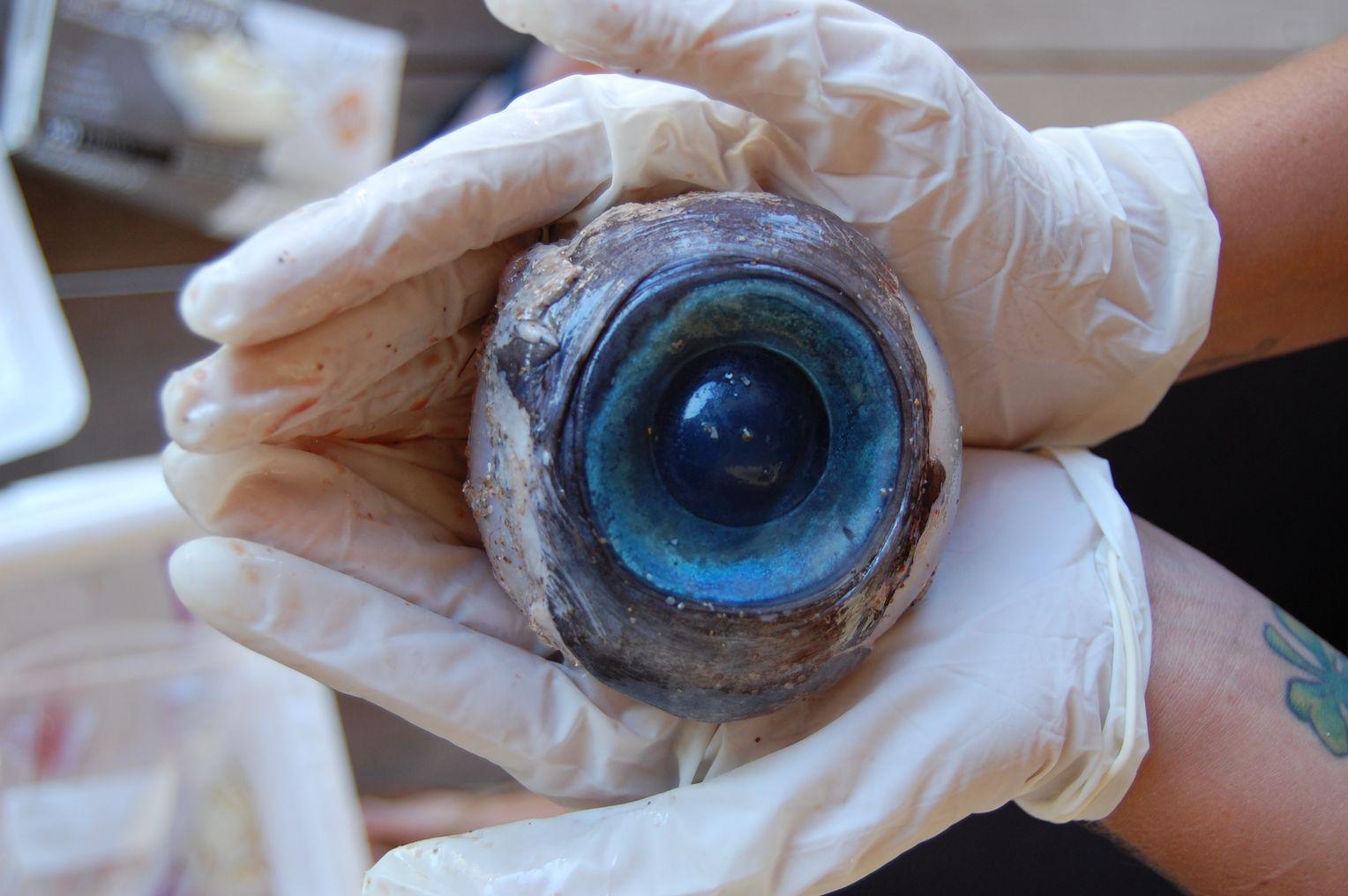 Riesen Augen