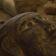 13 versiegelte Särge in Totenstadt entdeckt