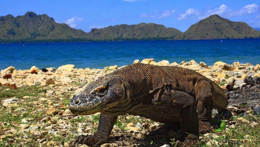 Komodo-Nationalpark: Inselhopping auf die indonesische Art
