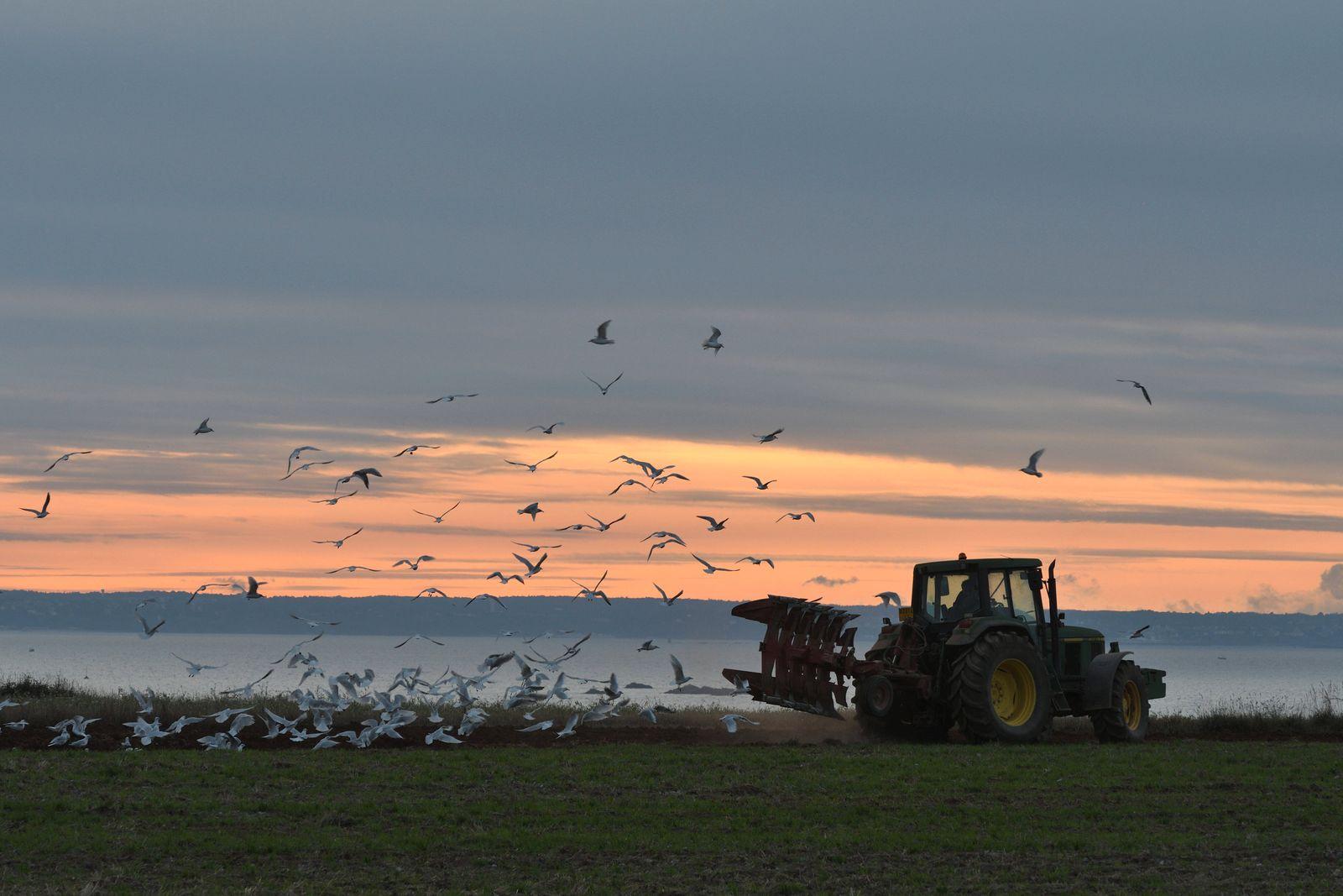 Landwirt pfluegt ein Feld im Abendrot, Frankreich, Bretagne, Côtes-d Armor, Erquy farmer plowing a field in red evening