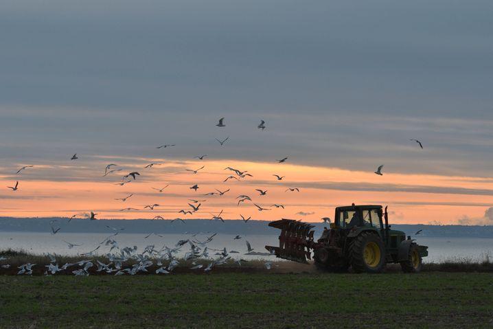 Trügt der schöne Schein? Die Landwirtschaft schadet der Natur, die Nitratbelastung in den bretonischen Flüssen ist seit 1960 von fünf Milligramm auf 30 Milligramm pro Liter angestiegen.