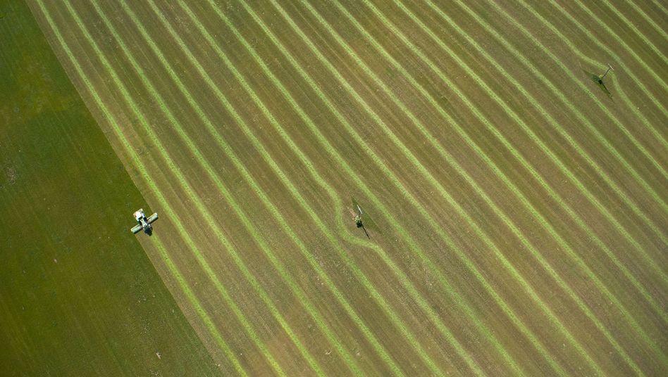 Grünfutterernte in Norddeutschland