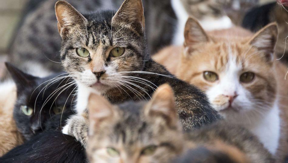 Im US-Bundesstaat Ohio hat eine 79-Jährige immer wieder streunende Katzen gefüttert - und wurde dafür nun zu einer Freiheitsstrafe verurteilt