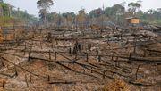 Abholzung begünstigt Zoonosen