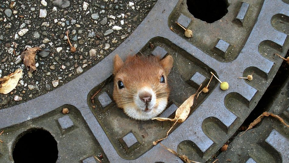 R.I.P. little buddy.