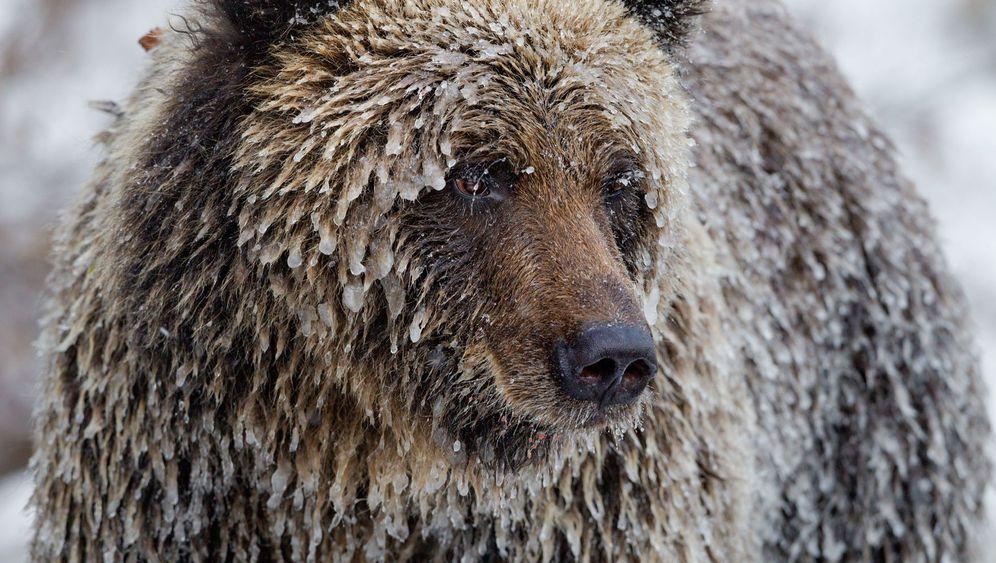 Fotostrecke: Kanadas Wilder Westen