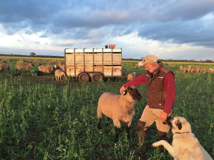 Klaus Seebürger streichelt eines seiner Schafe