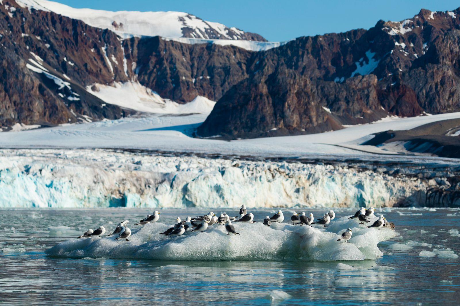 Arctic Views
