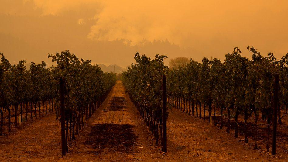 Waldbrand nahe einem Weingut in der Ortschaft St. Helena im Napa Valley