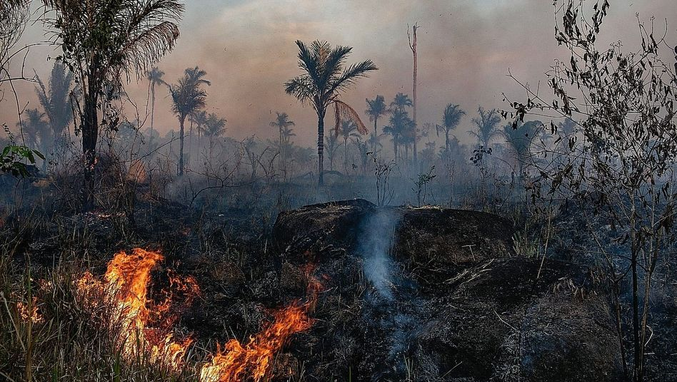The slashing and burning of the rainforest in northeastern Brazil: There were 2,248 such fires in June alone.