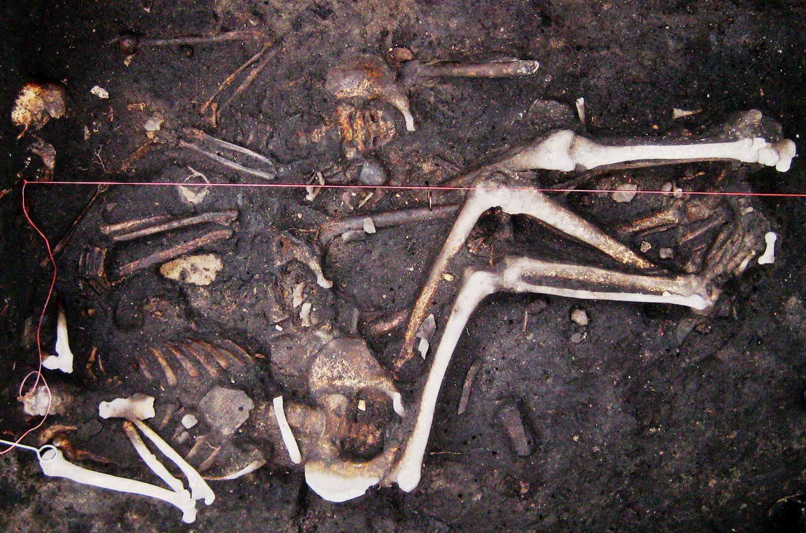 ACHTUNG SPERRFRIST 13. JANUAR 20.00 UHRPest überlebte Jahrhunderte in Europa