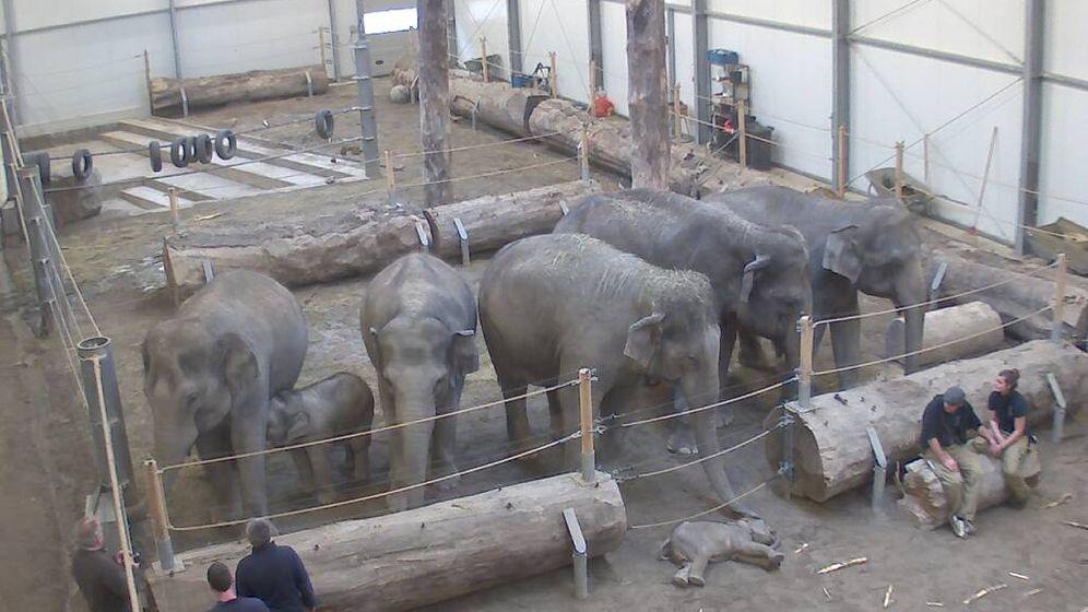 Elefantenbaby Lola: Große Trauer in München
