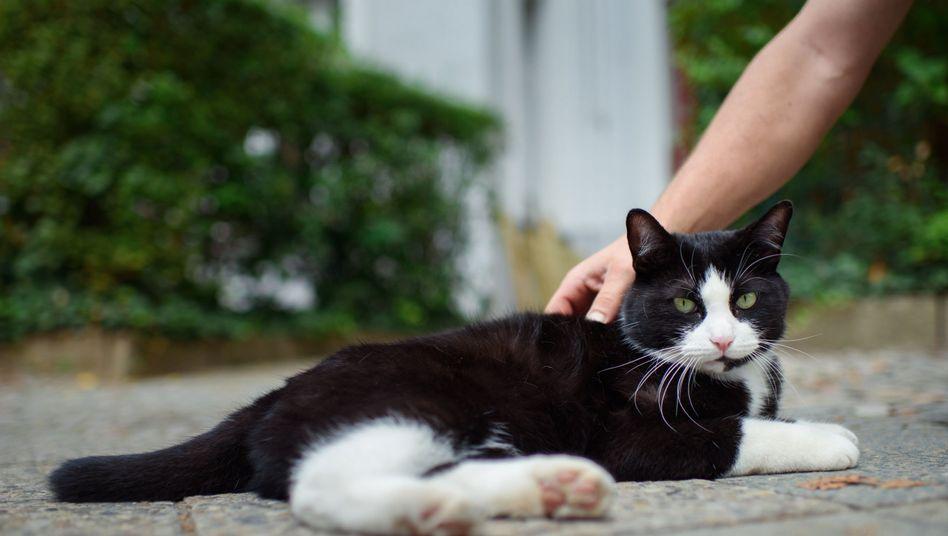Laut japanischen Forschern können Katzen ihren Namen aus anderen Wörtern heraushören.