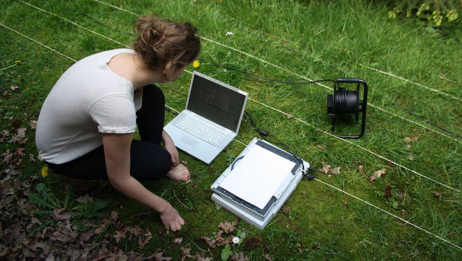 Leanne Wijnsma: Die niederländische Designerin scannt ihren Garten ab