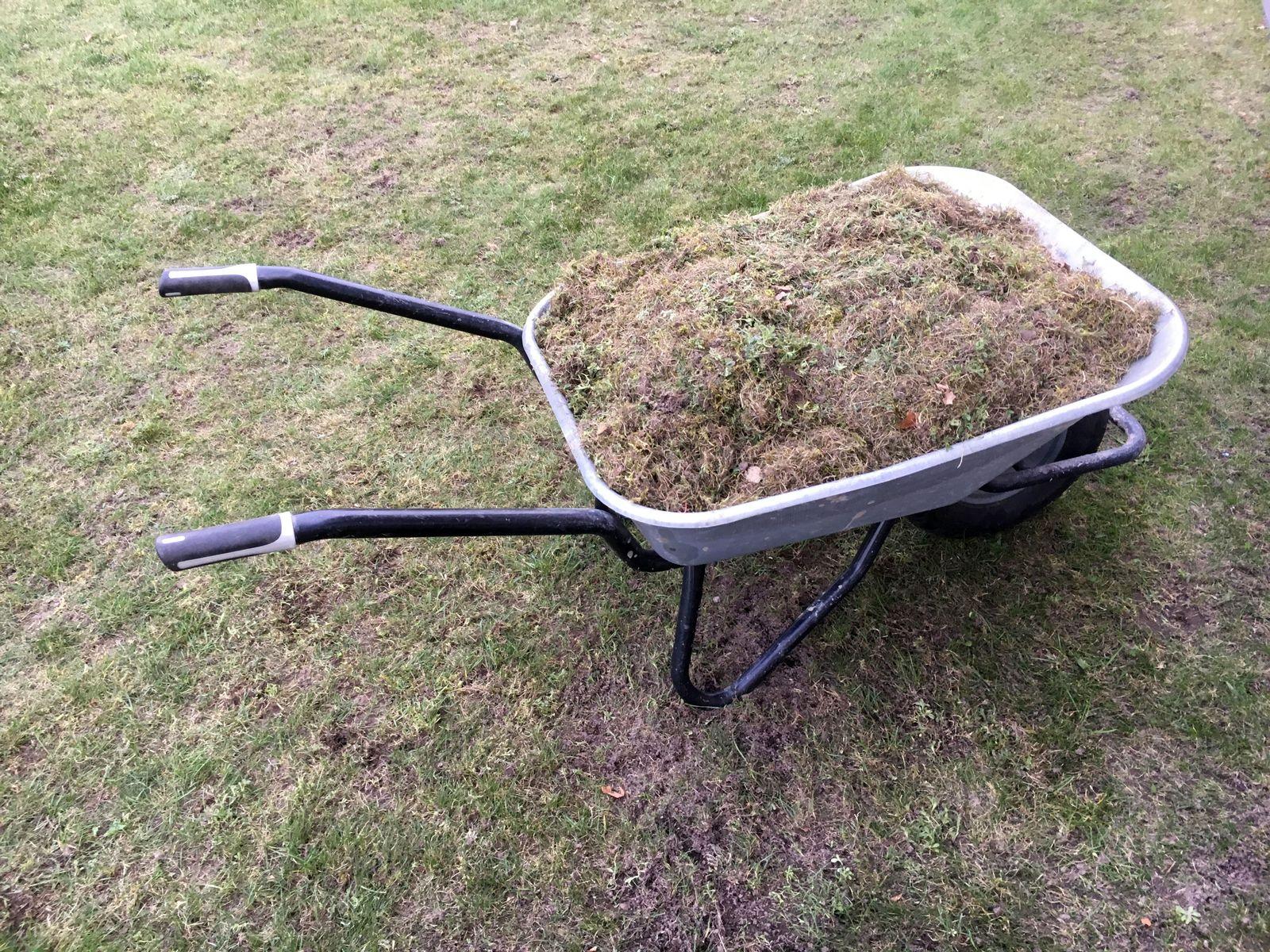 Heimwerkerblog/ Rasen