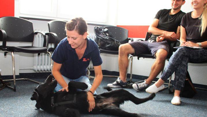 Kurs für Hundebesitzer: Flaffy braucht Hilfe