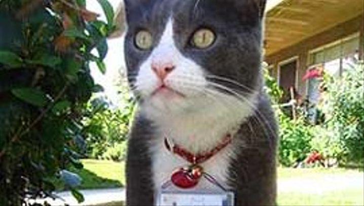 Cat-Cams: Die besten Bilder der fotografierenden Katzen